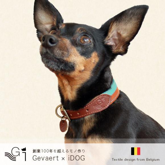 犬 首輪 リード レザー 本革 Gevaert×iDog ゲバルト×アイドッグ 愛犬用首輪 バイカラー M 犬の首輪  犬のリード