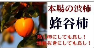 本場の渋柿「蜂屋柿」
