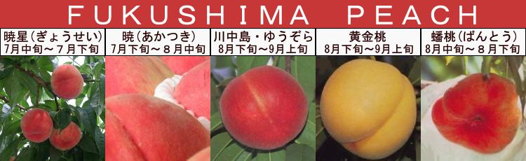 くだもの王国 福島の桃