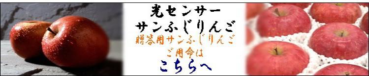 今年も蜜入りの期待大 福島のサンふじリンゴ