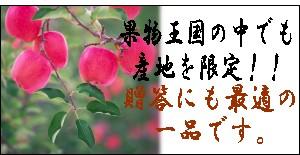 福島の贈答用サンふじりんご
