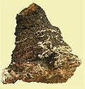 カバノアナタケ画像