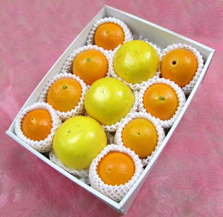 今が旬! アメリカ産 ホワイト グレープフルーツ & ネーブルオレンジ
