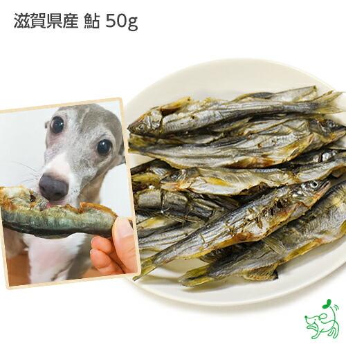 滋賀県産 鮎 50g