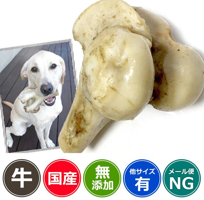 【国産・無添加】神戸牛の牛骨(げんこつ有)小(1本:500~699g)