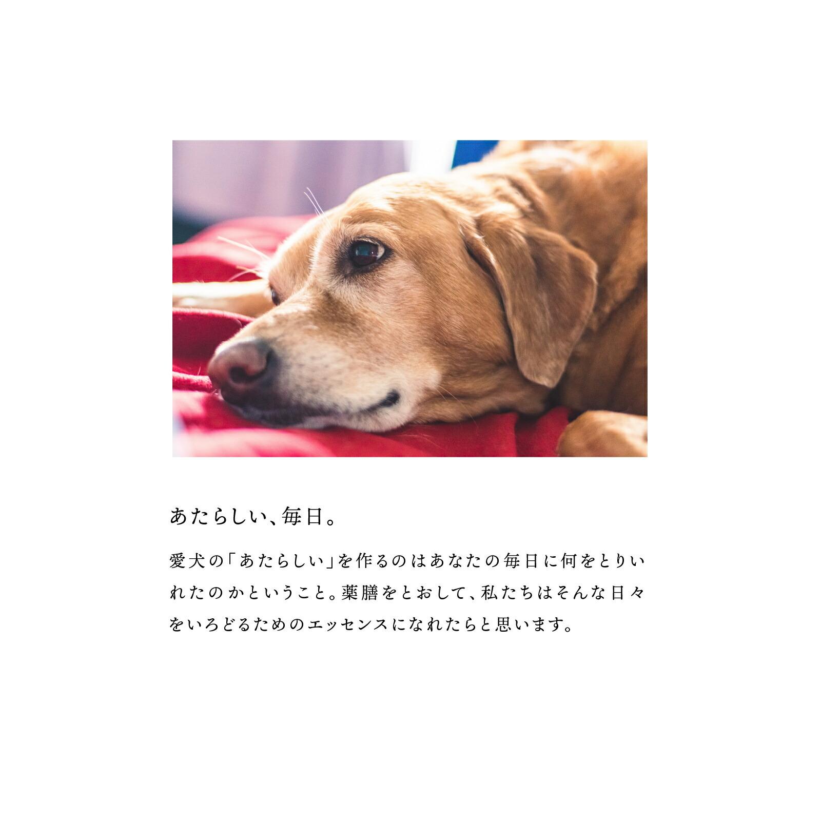 犬ノ薬膳とは04