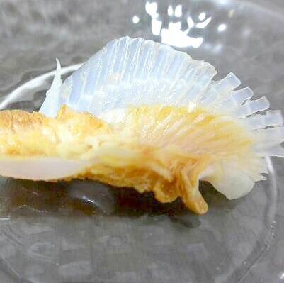 アブラツノ鮫むねびれぷるぷる