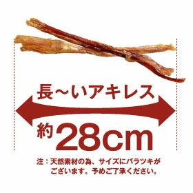 長ーいアキレス約28cm
