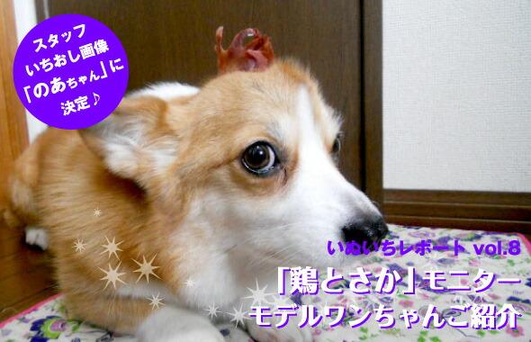 「鶏とさか」モニター・モデルワンちゃんご紹介