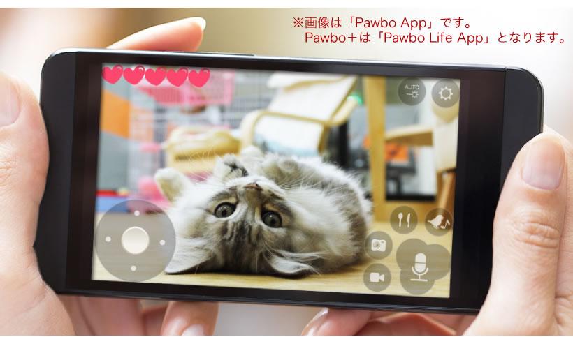 Pawbo+(パウボプラス)の画像