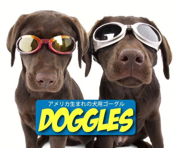da2f0bd989 auc-bc-nextlife  Pet sunglasses for dog goggles dongles military ...