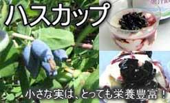 奇跡の果実ハスカップ