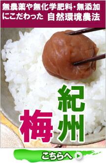 紀州梅【梅干】