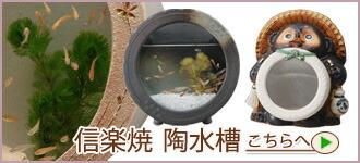 信楽焼 陶水槽