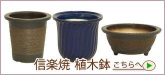 信楽焼 植木鉢