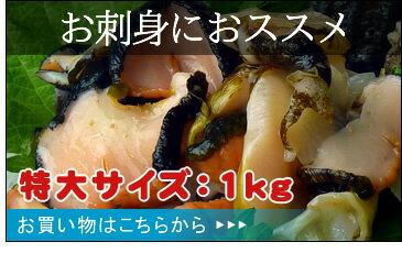 お刺身におススメ-特大サイズ1キロ