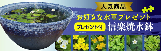 水鉢水草セット
