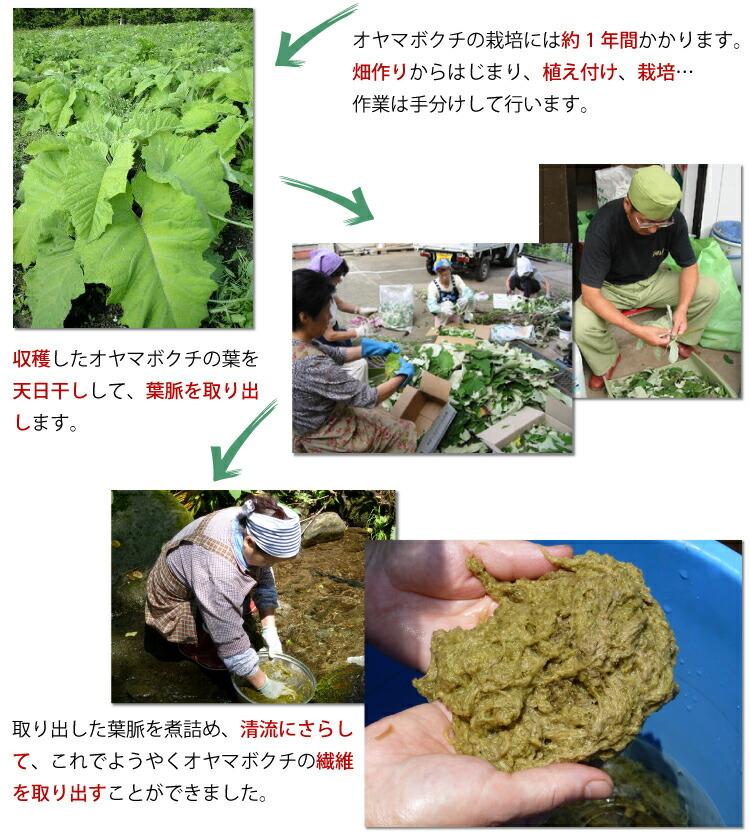 オヤマボクチの栽培には約1年間かかります。畑作りからはじまり、植え付け、栽培…作業は手分けして行います。 収穫したオヤマボクチの葉を天日干しして葉脈を取り出します。取り出した葉脈を清流にさらして、これでようやくオヤマボクチの繊維を取り出すことができました。