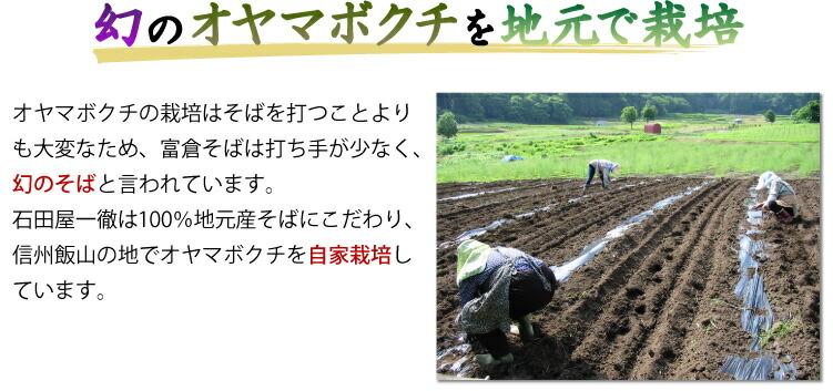 幻のオヤマボクチを地元で栽培 オヤマボクチの栽培はそばを打つことよりも大変なため、富倉そばは打ち手が少なく、幻のそばと言われています。 石田屋一徹は100%地元産そばにこだわり、信州飯山の地でオヤマボクチを自家栽培しています。