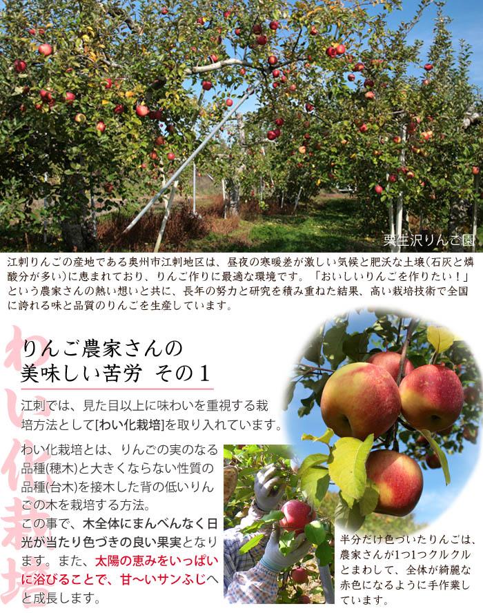 リンゴの美味しい秘密(わい化栽培)