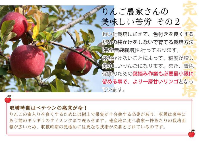 リンゴの美味しい秘密(完全無袋栽培)