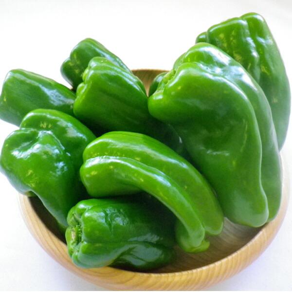 新鮮野菜 ピーマン