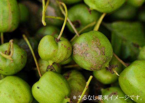 サルナシ果実のイメージ