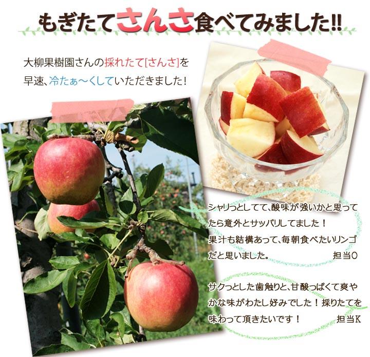 さんさ(リンゴ)