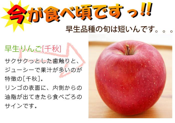 今しか食べれない!期間限定の早生りんご