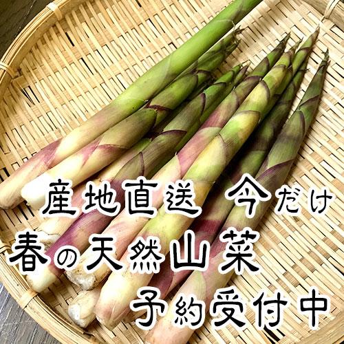 清水農園の山菜