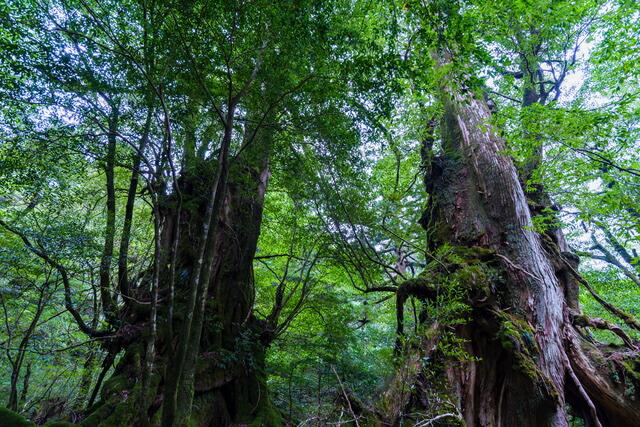 古代の森イメージ