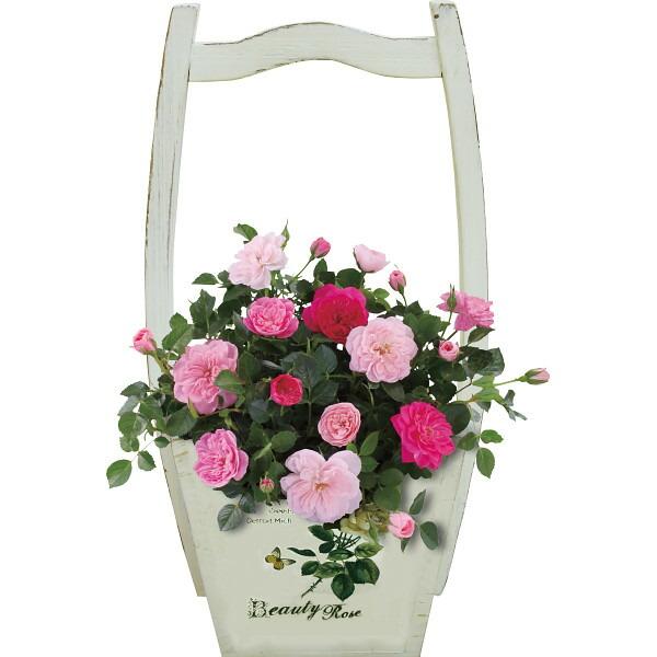 【送料無料】【母の日】ミニバラ鉢植え スイートハートメモリー お【代引不可】【ギフト館】