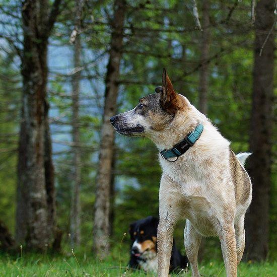 犬用品/ドッググッズ/首輪/胴輪/リード/ドッグウェア/犬服/ZOOLAND