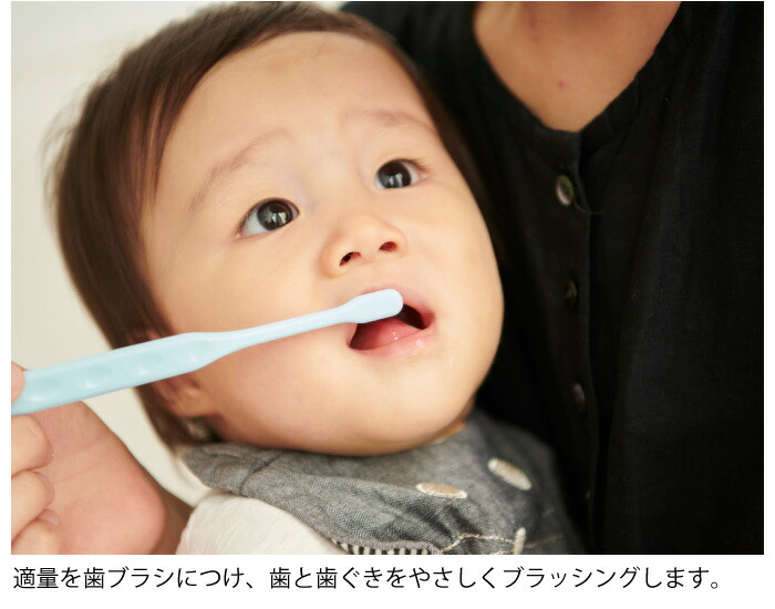 適量を歯ブラシにつけ、歯と歯ぐきをやさしくブラッシングします。