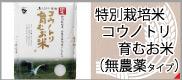 コウノトリ(無農薬)