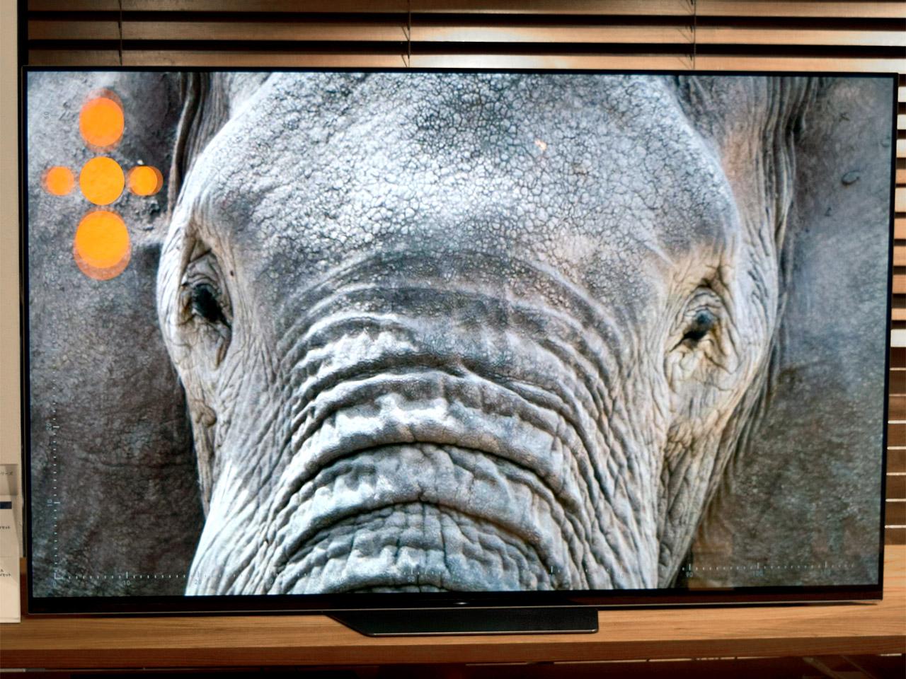 A8Fシリーズの画面にアフリカゾウの実寸が映し出された様子