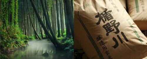 楯の川 契約栽培酒米