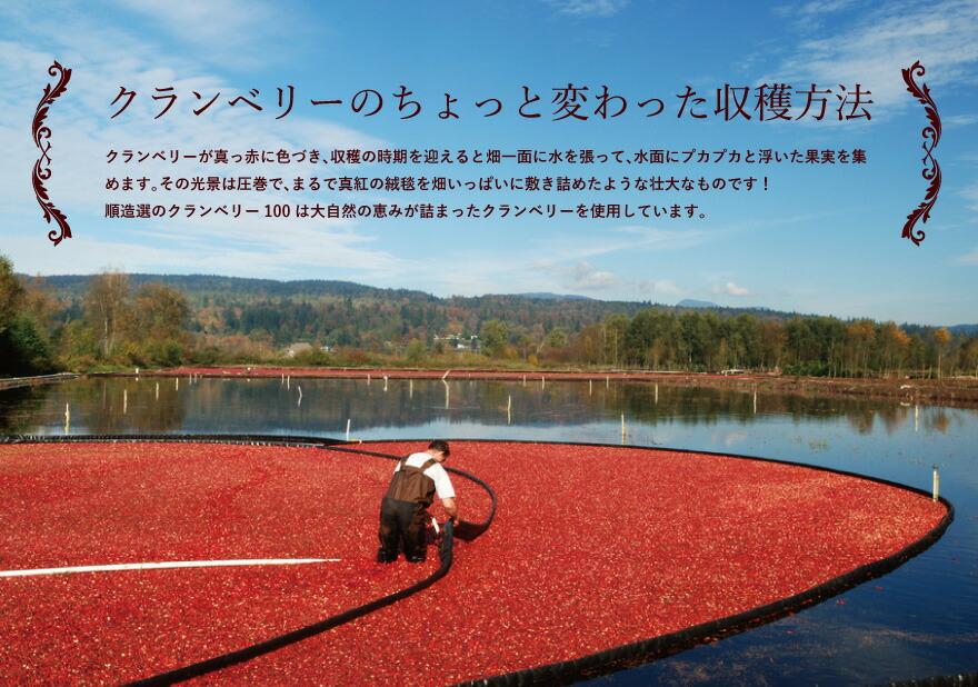 クランベリーのちょっと変わった収穫方法