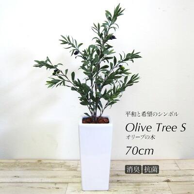 オリーブツリー