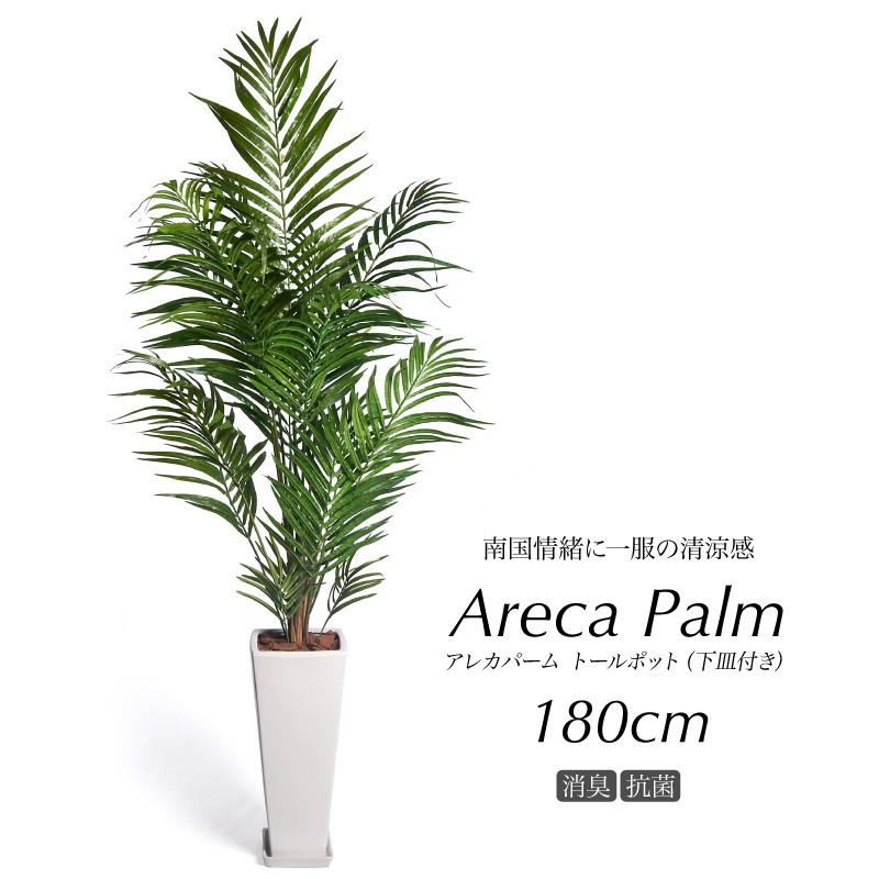 アレカパーム170cm