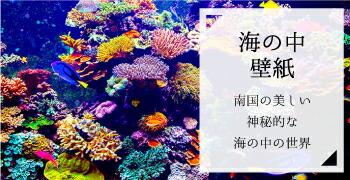 """誘導バナー_海の中"""""""