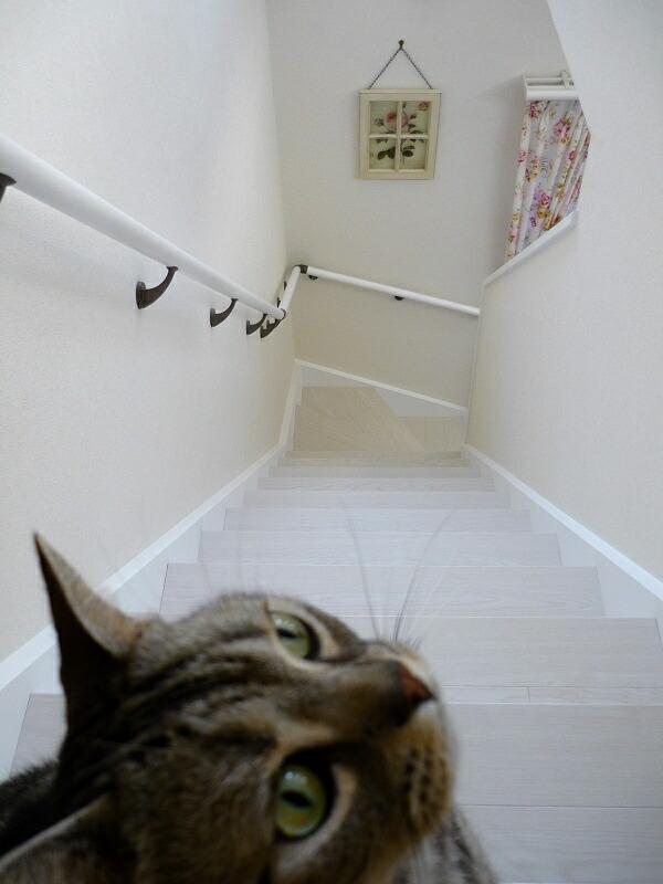 2011-1124-stair05.jpg