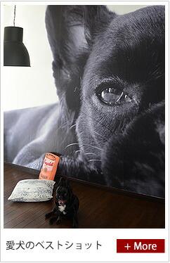 ペットの写真を壁紙に