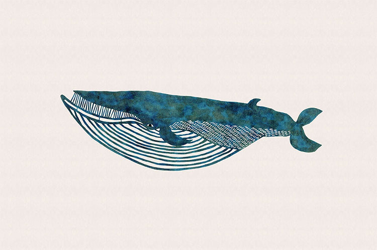 kata kata / ナガスクジラ
