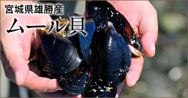 三陸宮城県産 雄勝湾ムール貝