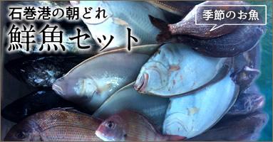 三陸宮城県産 石巻朝どれ鮮魚