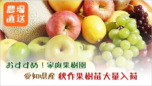 稲沢産果樹苗<br>人気の柑橘多数