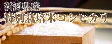 新潟県産特別栽培コシヒカリ