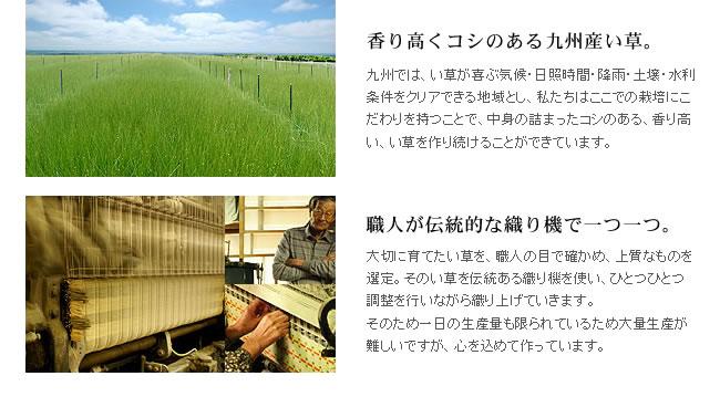 国産い草100%のい草ラグ