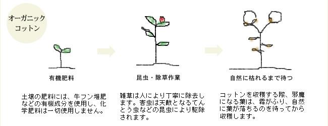オーガニックコットン綿入りケット_シングル_08